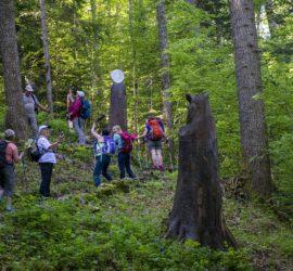 Massif du Jura juin 2019. Sentier des statues. Photo: Yves Crozelon
