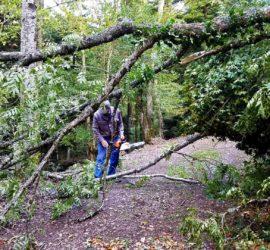 1/2 journée de travail, Sept. 2019. enlèvement d'arbre par Jean-Paul Streif sous l'oeil de Yves Ziegler.
