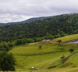 Le Tour du vallon Kaltenbach. Panoramique sur La ferme auberge Kohlschlag. 15-07-2020. Photo: Yves Crozelon