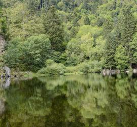 Randonnée dans la vallée de Munster par la vallée de la Wormsa. Panoramique sur le Lac de Fischboedlé. Photo: Yves Crozelon