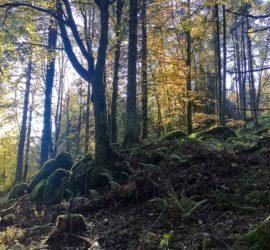 Sortie surprise à La Bresse 18-10-2020. Un décor de mousse Photo: Gabrielle Crozelon