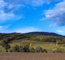 Découverte des coteaux du Vieil Armand aux couleurs automnales. Vue sur Cernay Photo: Yves Crozelon