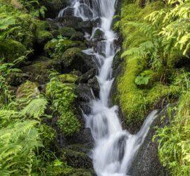 Saegmatt-Hohneck. 27-06-2021. Cascades du Stolz-Ablass. Photo: Yves Crozelon